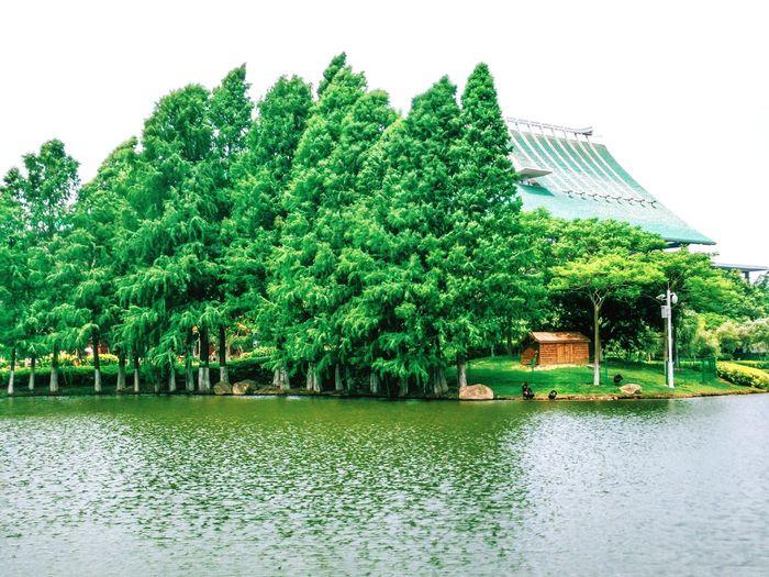 Lake Lake View Green Green Green!  Rooftop Rooftop View  At University University