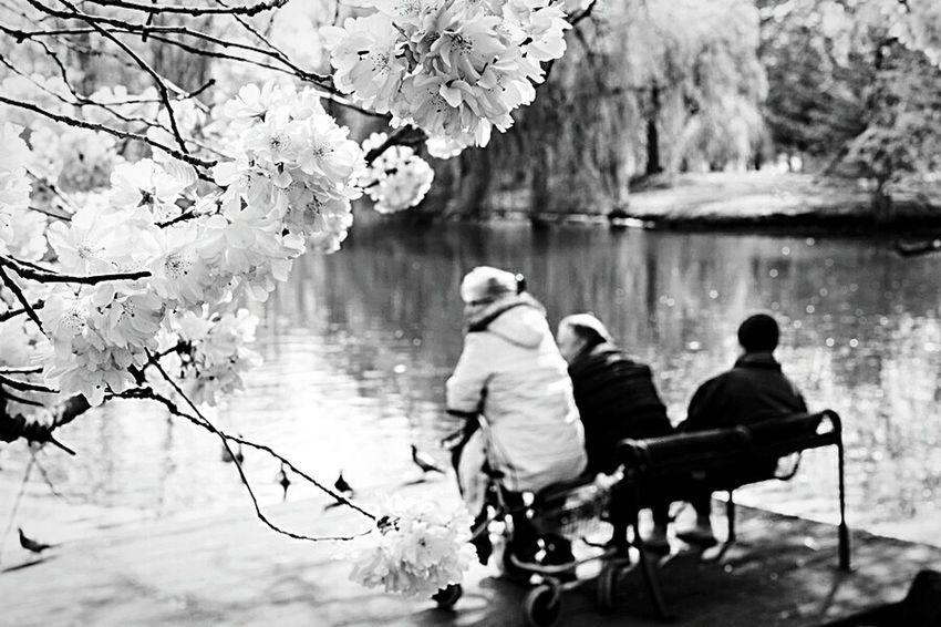 Sittin' on the dock of the bay... River Riverside Cherry Blossoms Brunswick Braunschweig Footbridge