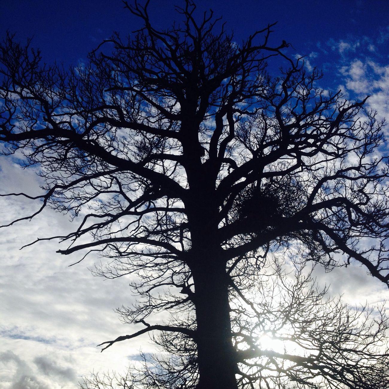 Lone Walker Lone Tree