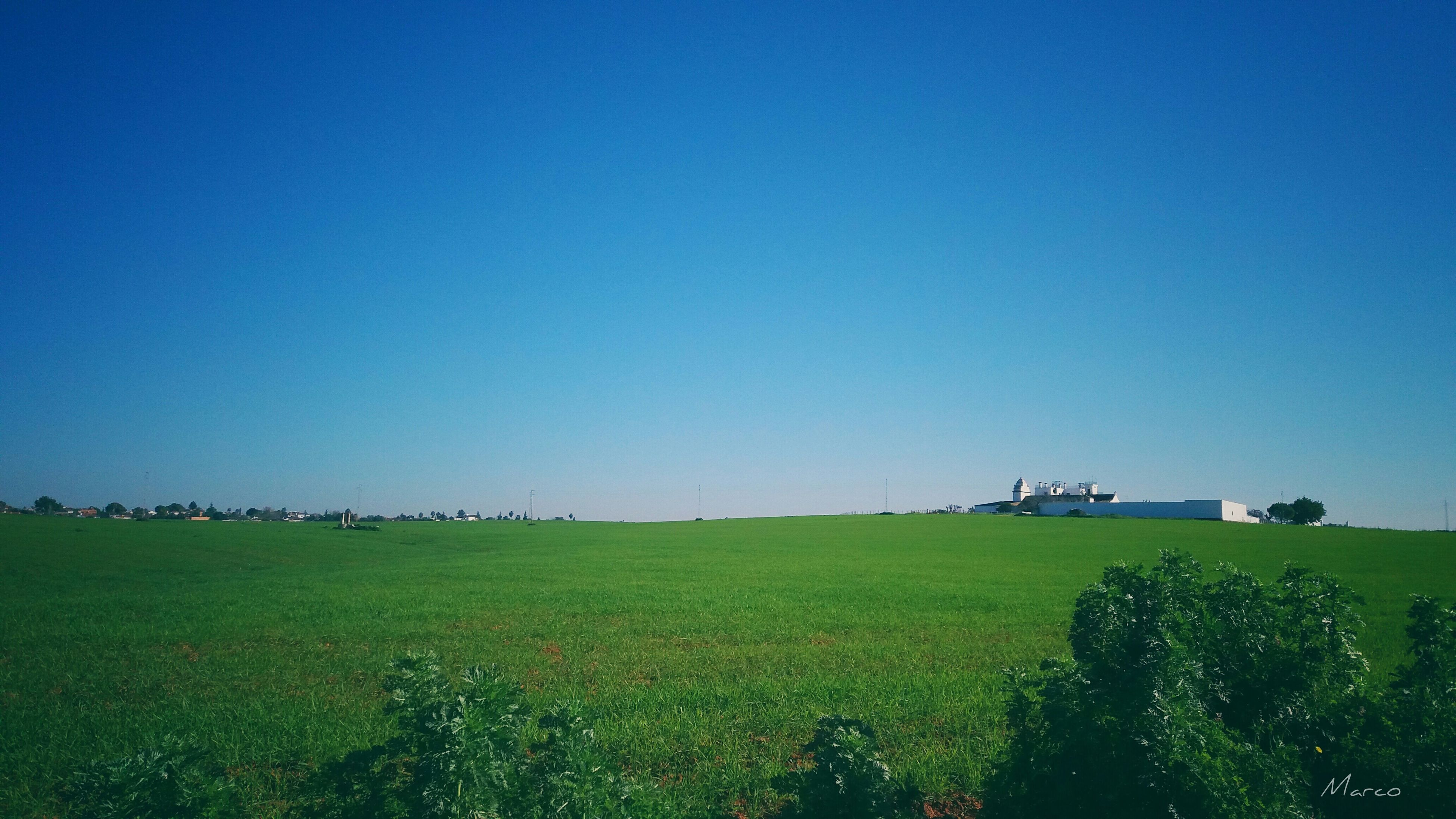 blue, copy space, clear sky, tranquil scene, landscape, tranquility, scenics, growth, green color, rural scene, field, beauty in nature, nature, farm, agriculture, green, day, outdoors, cultivated land, non-urban scene, no people, plantation, grassy, solitude