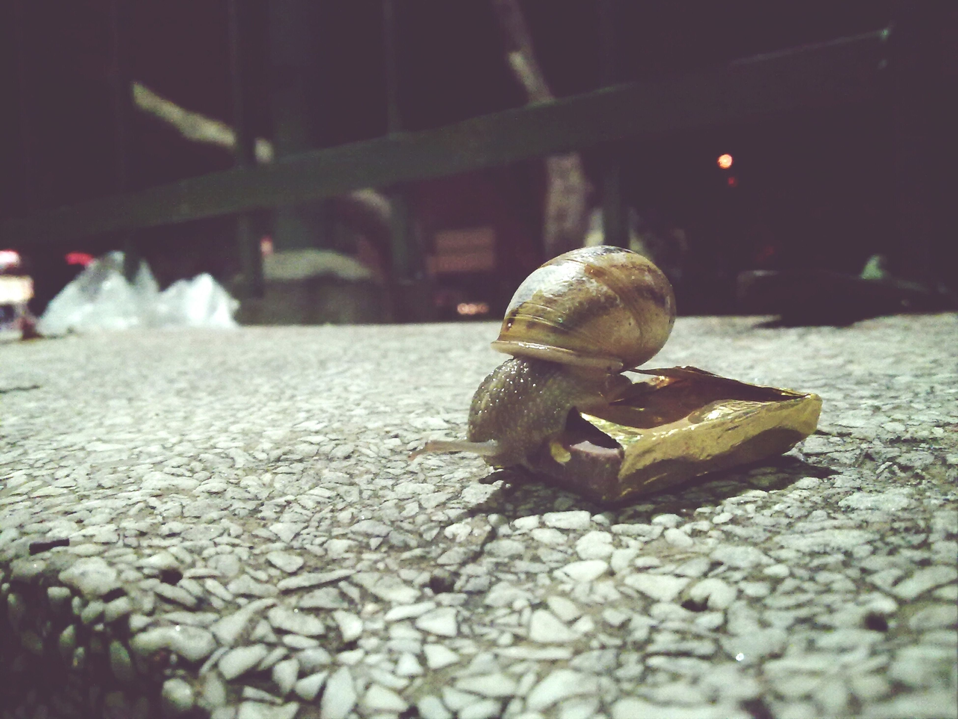 one animal, animals in the wild, animal themes, wildlife, selective focus, focus on foreground, surface level, close-up, snail, insect, animal shell, outdoors, full length, street, rock - object, day, no people, nature, road, sunlight