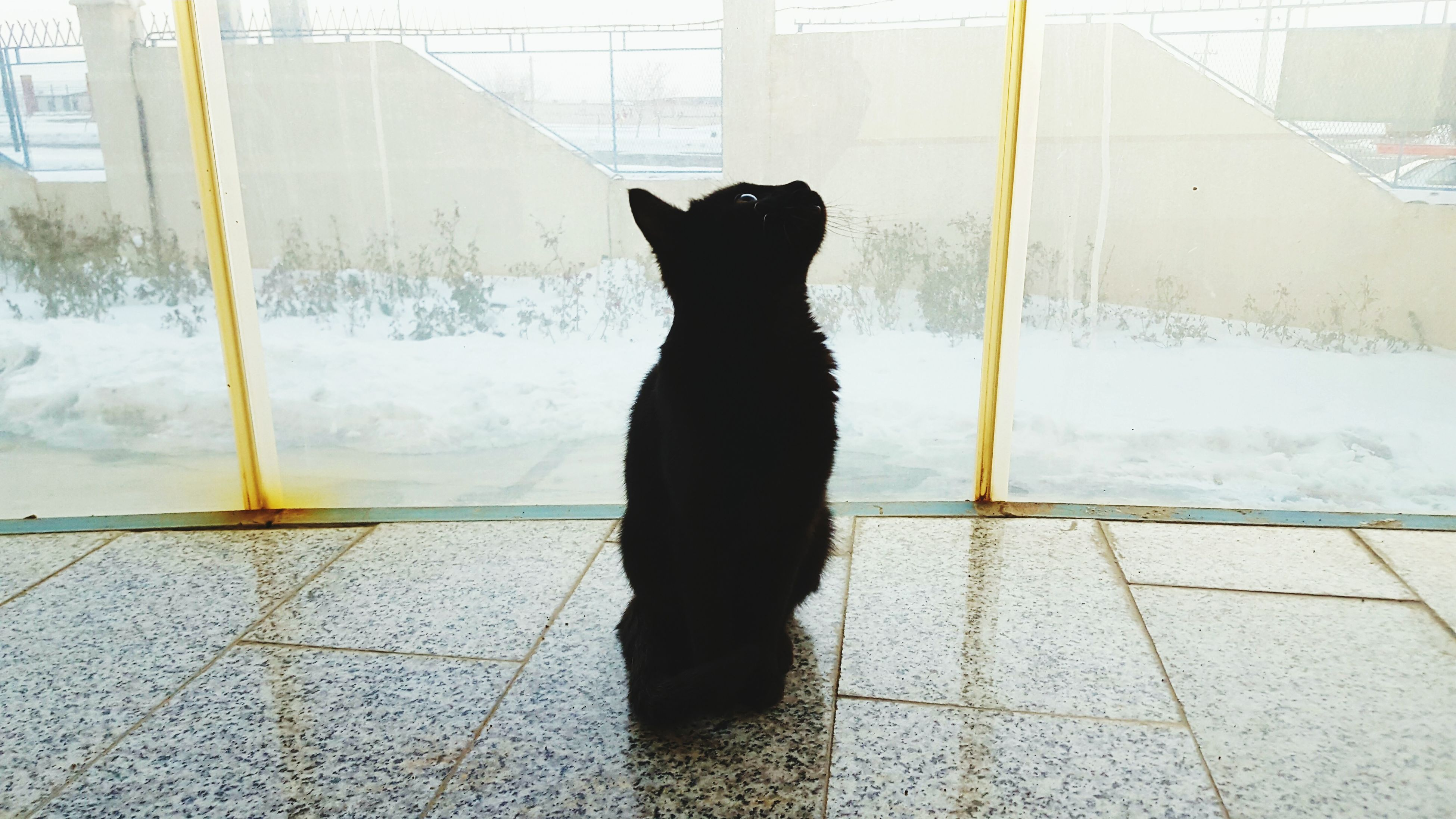 Window Indoors  Pets Mammal Cat Photogenic  Cat Lovers Cats Winter