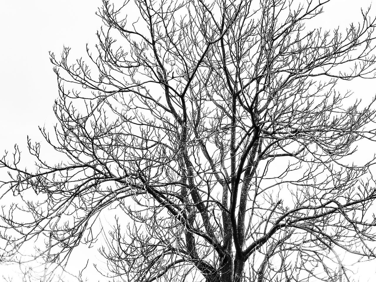 Low Angle View Bare Tree Tree Branch Nature Clear Sky No People Sky Beauty In Nature Outdoors Day Tranquility Dried Plant Black And White Nature Nature_collection Tree Branches