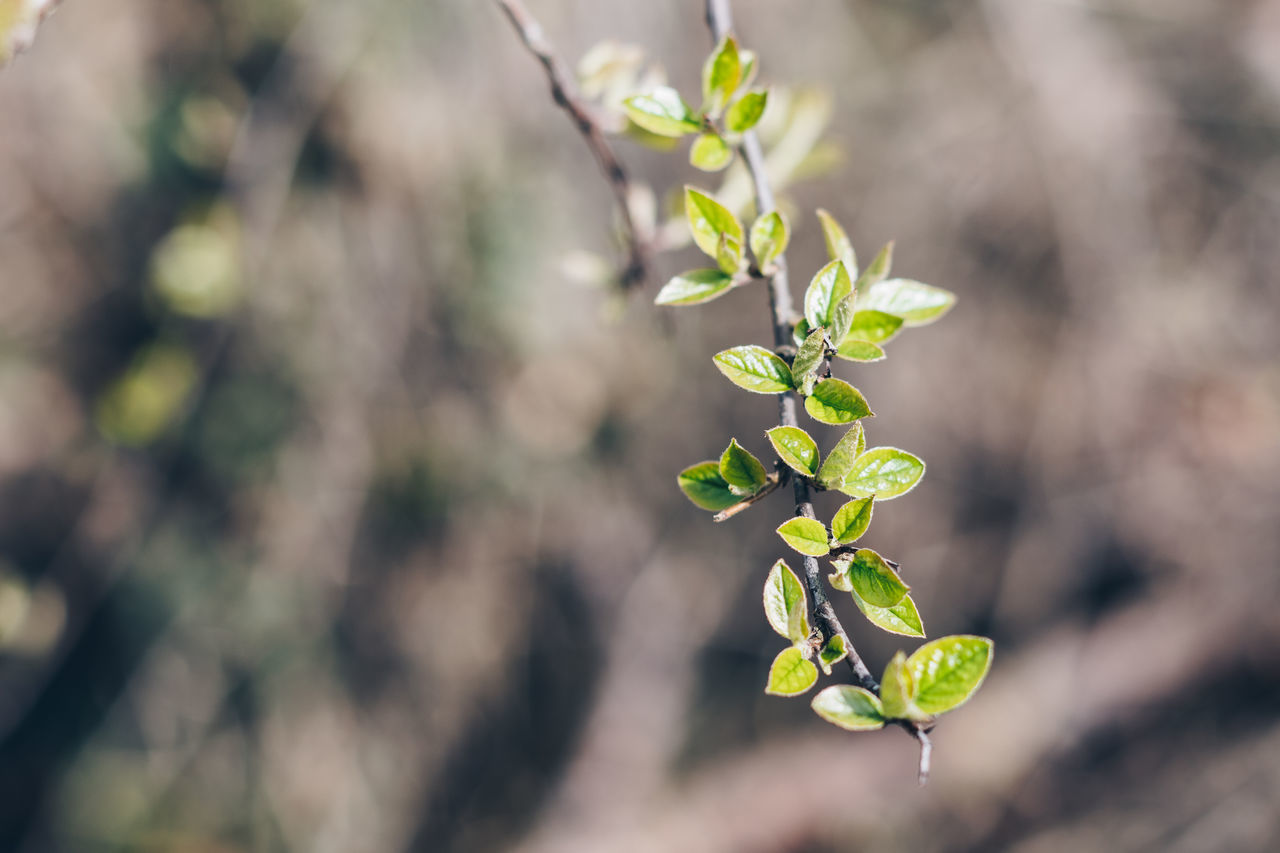 Spring spring. Nature Close-up Growth Plant Beauty In Nature No People Leaf Springtime Outdoors Freshness Day