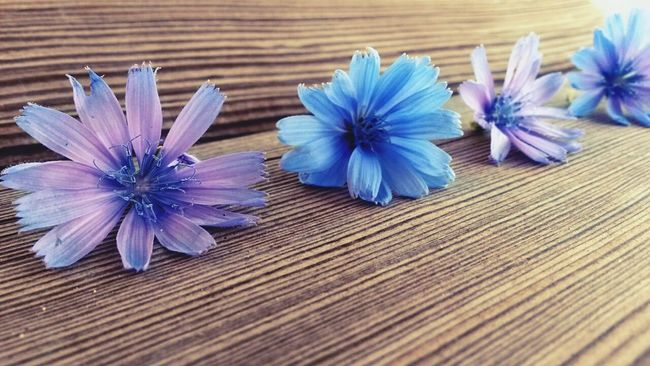 Flower Pink Flower Blue Flowers Taking Photos Hello World Beauty In Nature Burdur Turkey