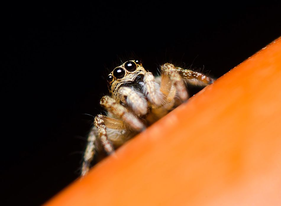 Beautiful stock photos of spider's, Animal Themes, Animals In The Wild, Beauty In Nature, Black Background