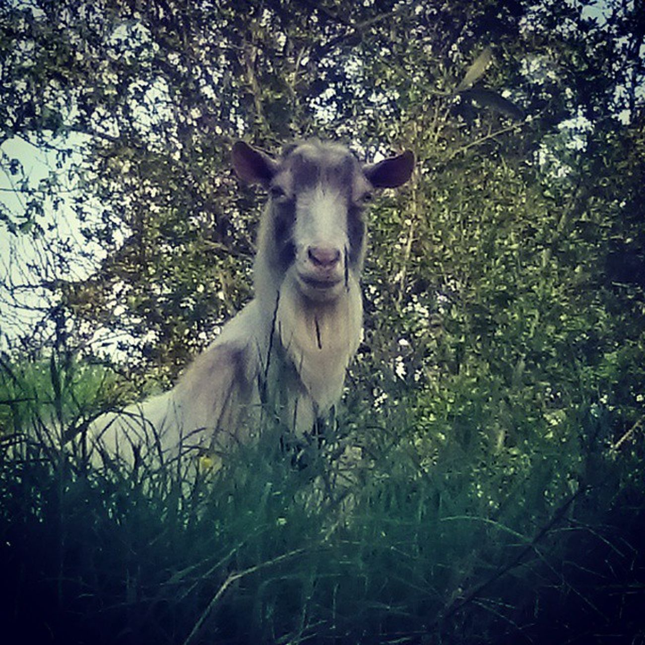 Vivere alla Heidi Camminare Calliope Australianshepherd Pastoreaustraliano Stellasanmartino