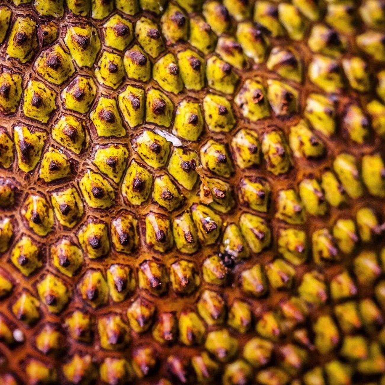Fruit Exotic Brotfrucht