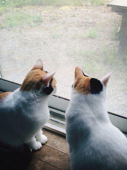 Cat Cats EyeEm Best Shots
