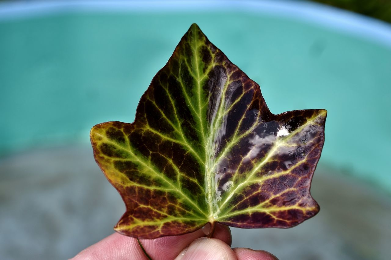 Close-Up Of Cropped Hand Holding Leaf