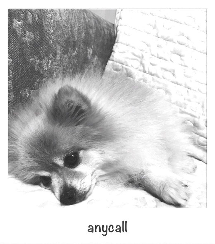 Anycall