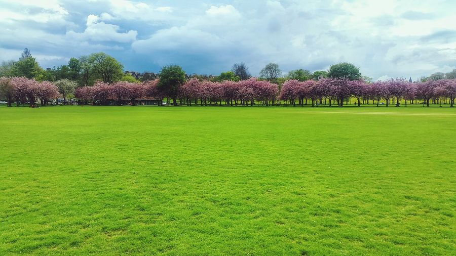 Blossoming Tree Grass Colorful Beautiful Walking Around Mobilephotography Edinburgh Nature