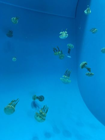 Jellyfish Water Underwater Swimming Blue Animal Themes Sea Life UnderSea Fish Sea Nature Large Group Of Animals No People Beauty In Nature Day