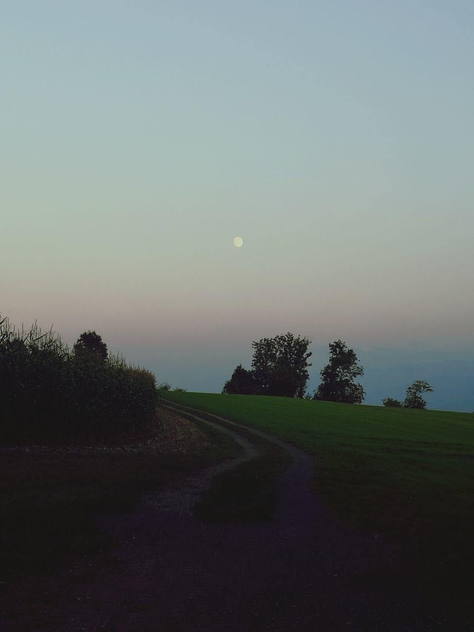 nature, tranquil scene, beauty in nature, tranquility, scenics, landscape, tree, the way forward, clear sky, moon, outdoors, no people, sky, sunset, grass, growth, night