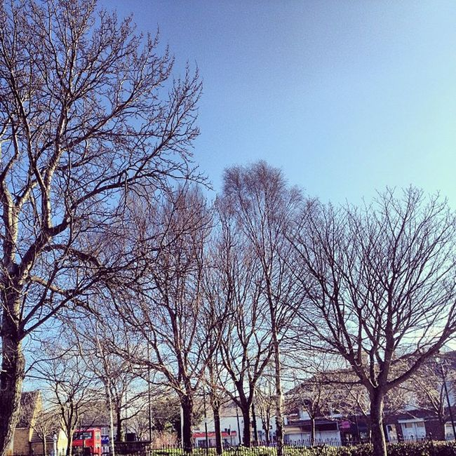 Winter Trees in Hetton Blue sky buildings capture iam李小龍 instanow instacapture instagrammer instapicture picoftheday sunderland northeast england valenciafilter gorgeousday