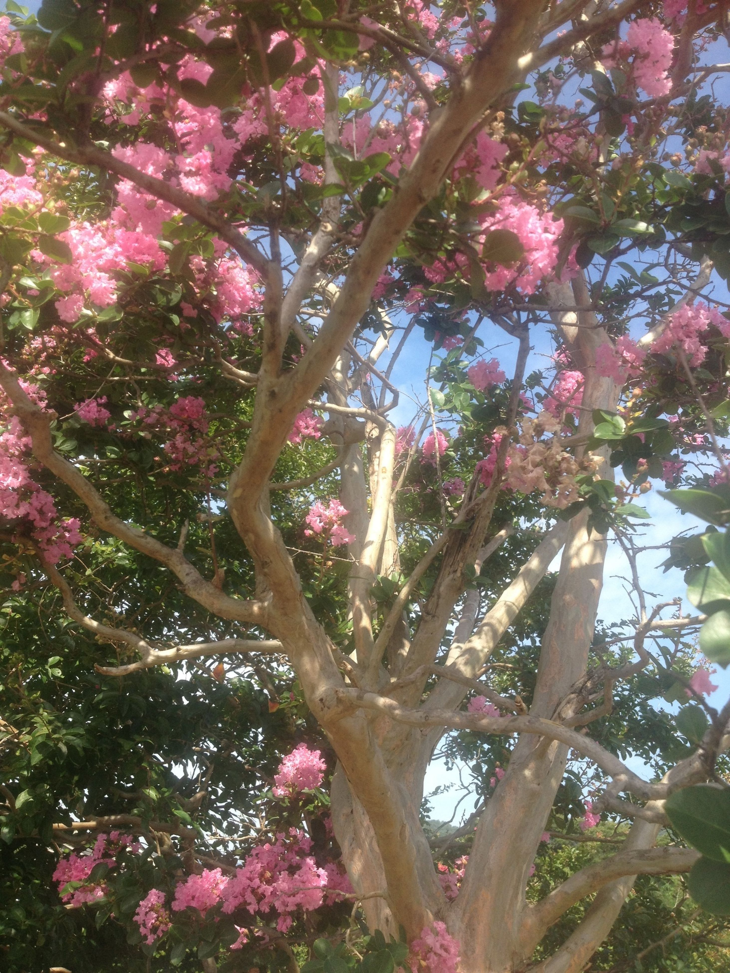 tree, growth, flower, branch, low angle view, beauty in nature, nature, freshness, pink color, tranquility, leaf, fragility, day, outdoors, plant, no people, tree trunk, sunlight, blossom, growing