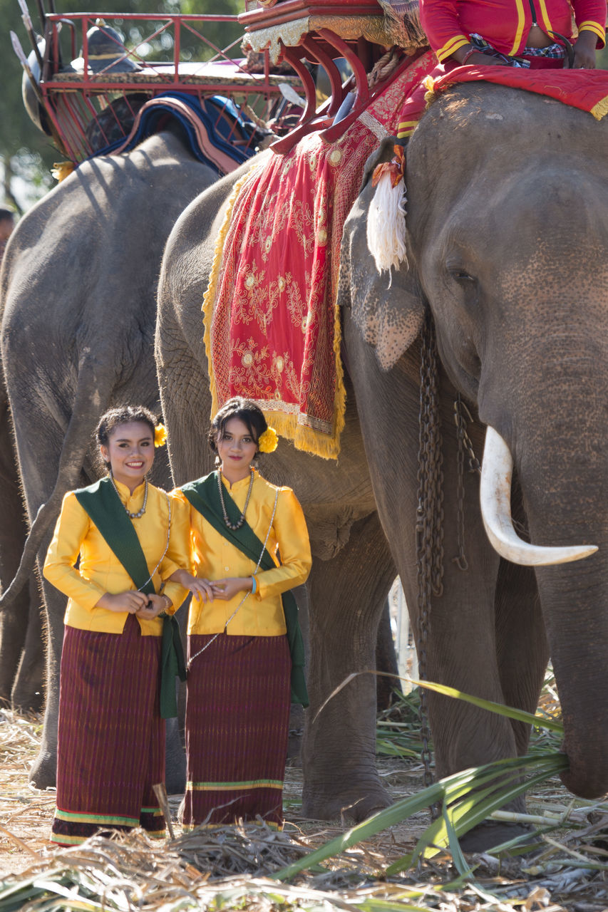portrait, elephant, looking at camera, front view, standing, one animal, animal themes, smiling, mammal, day, outdoors, young adult, adult, happiness, adults only, people, only men