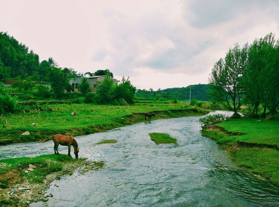 Flowing Water And Household Horse