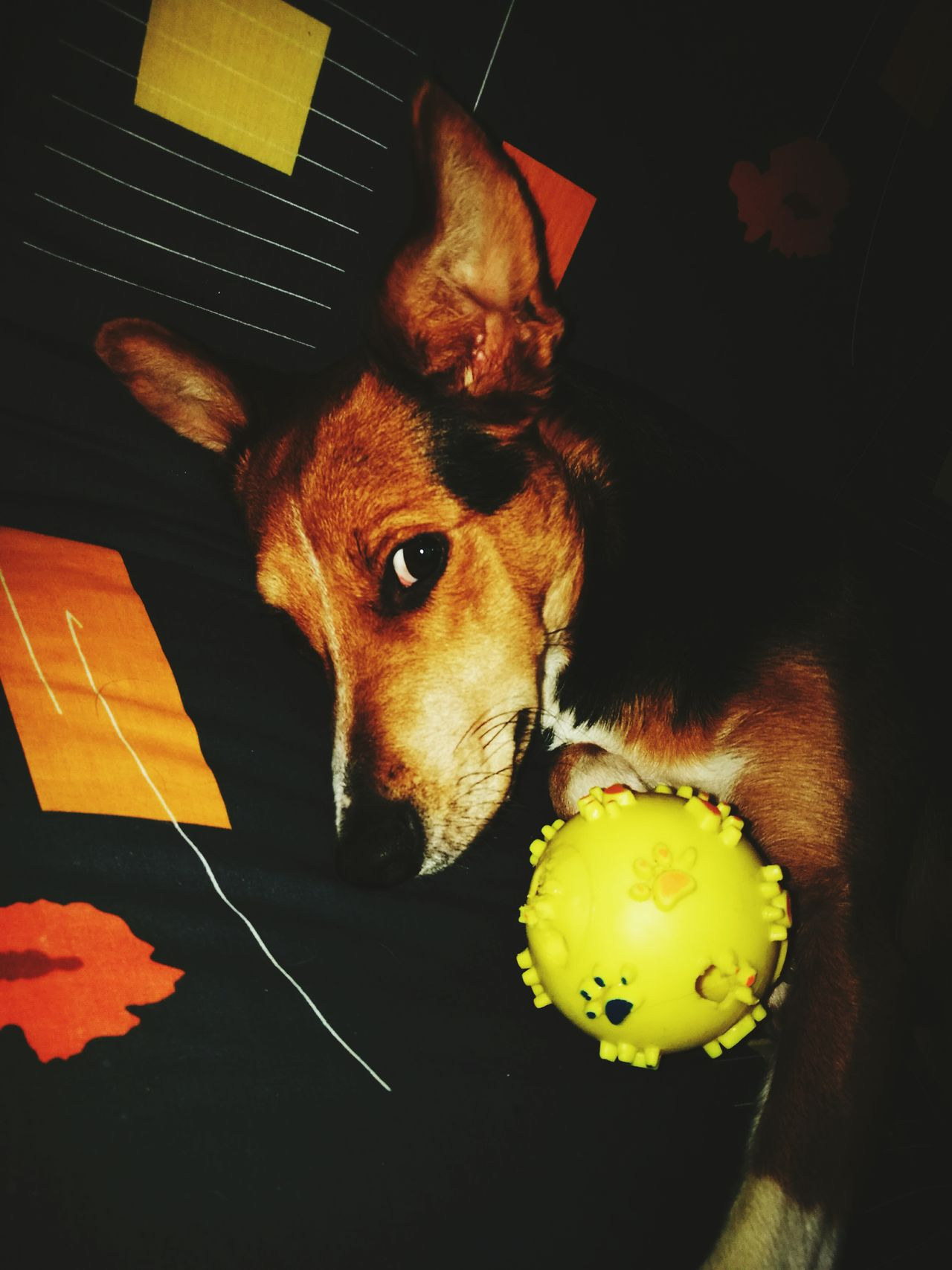 Lasciatemi dormire😂 Pets Domestic Animals Dog Dormirecosì First Eyeem Photo Day