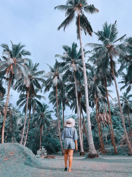You'll find me right beneath the palm trees. 🌴🌴🌴 Palm Tree Tree Rear View Walking Nature One Person Scenics Beauty In Nature Outdoors Tree Trunk Day Growth Vacations Lifestyles Real People Women Full Length Sky Young Adult Young Women