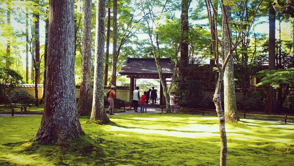 三千院 大原 京都 Kyoto Kyototravel Green Color Kyoto Garden Japanese Garden Hello World Relaxing 2015  Kyoto, Japan