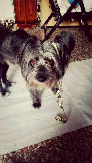 Monello Baby ❤ I Love My Dog Puppy Love