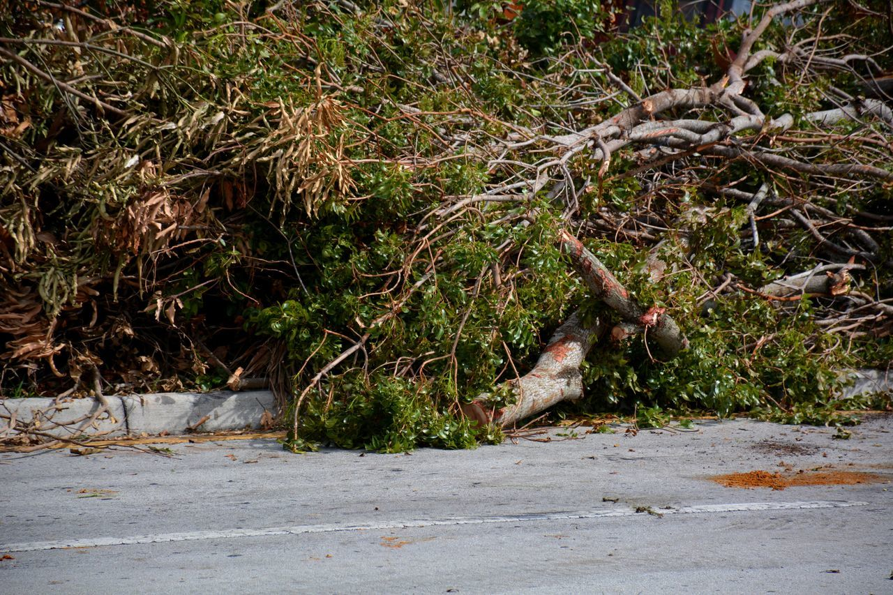 Hurricane Irma mess... Hurricane Irma 2017 Hurricane Damage Downed Tree Outdoors Downed Trees Storm Debris Debris Tree TreePorn South Florida Roadside Mess Aftermath Cleanup Landscape Piles Of Wood Fallen Tree Hurricane Season  No People