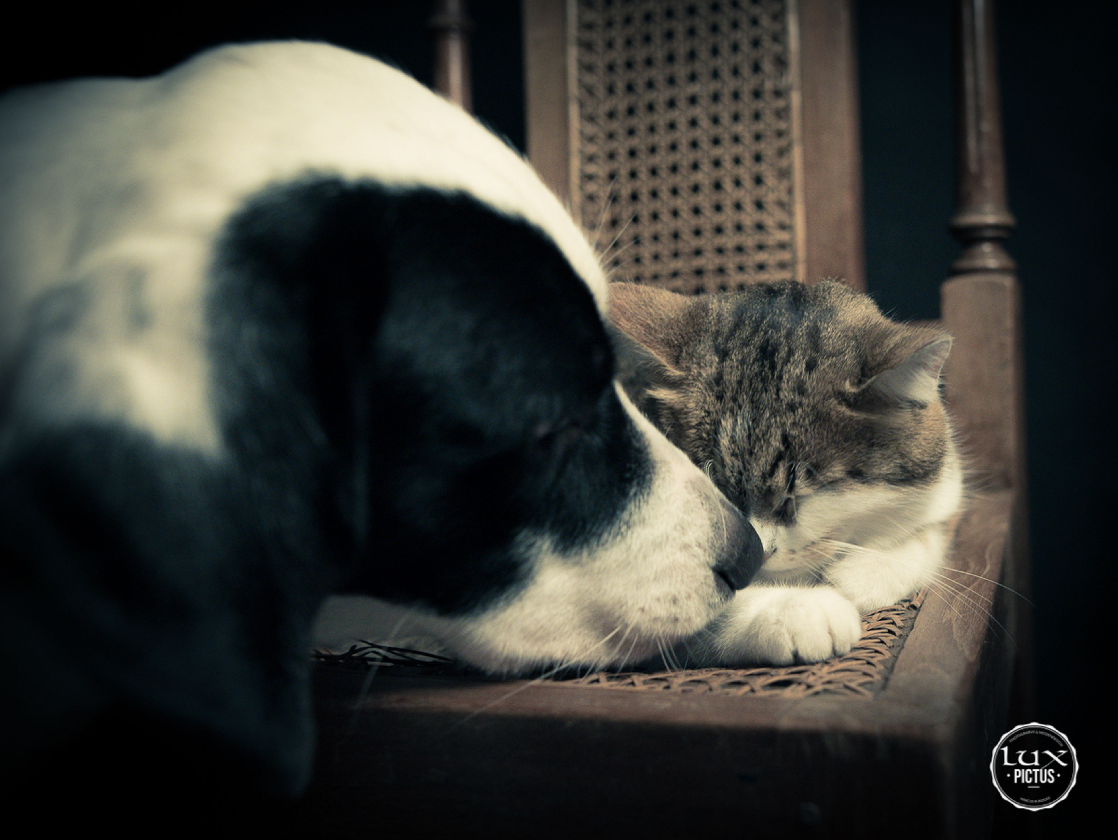 pets, one animal, animal themes, domestic animals, mammal, indoors, relaxation, sleeping, no people, lying down, dog, close-up, day