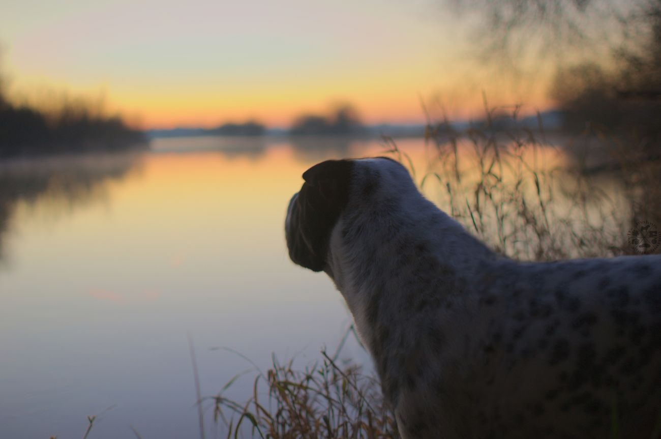 Sunset Sonnenuntergang Beauty In Nature Nature Natur River Fluss No People Outdoors Water Animal Themes One Animal Celle Dog Photography Hundefotografie Dog Hund Hannover, Germany Braunschweig