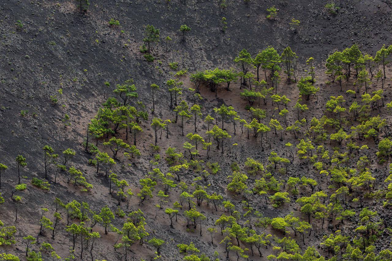 La Palma Vulcano San Antonio trees in crater Abstract Crater Green And Gray La Palma Plant Trees Vegetation Vulcano Vulcano San Antonio