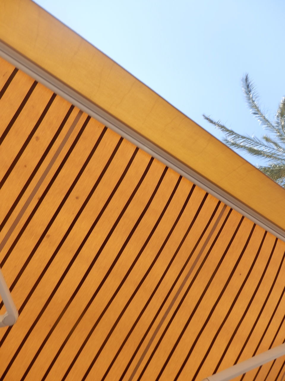 day, outdoors, no people, low angle view, yellow, sky, architecture, built structure, nature, tree, close-up