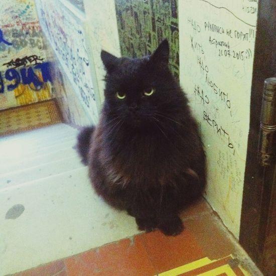 Russia Moscow Moscow City Bulgakov  Museum Begemot Cat Enjoying Life Lifestyle Trip