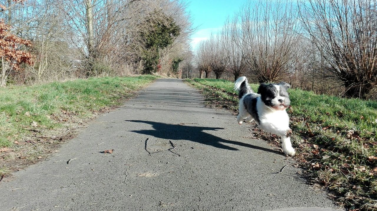 pets, domestic animals, dog, animal themes, one animal, mammal, bare tree, tree, day, outdoors, sunlight, no people, shadow, road, nature, grass, sky