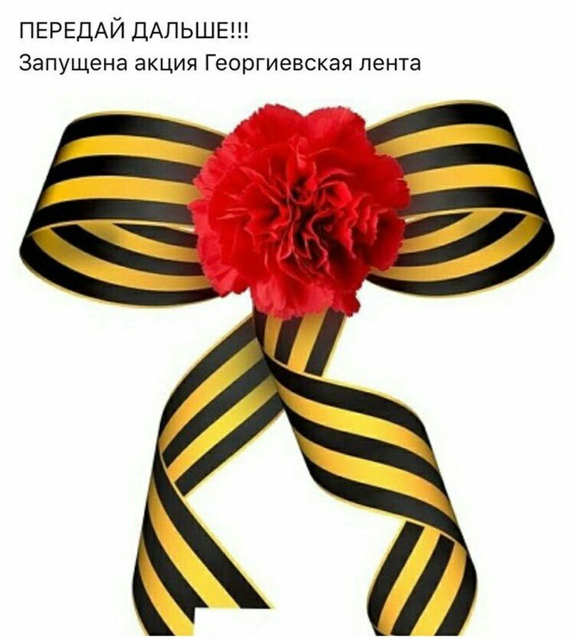 striped, flower, studio shot, white background, red, close-up, no people, gift, indoors, flower head, day