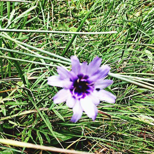 Una flor cualquiera en el recorrido de CavallsdelVent para un compañero especial!!! Enric, eres muy grande...