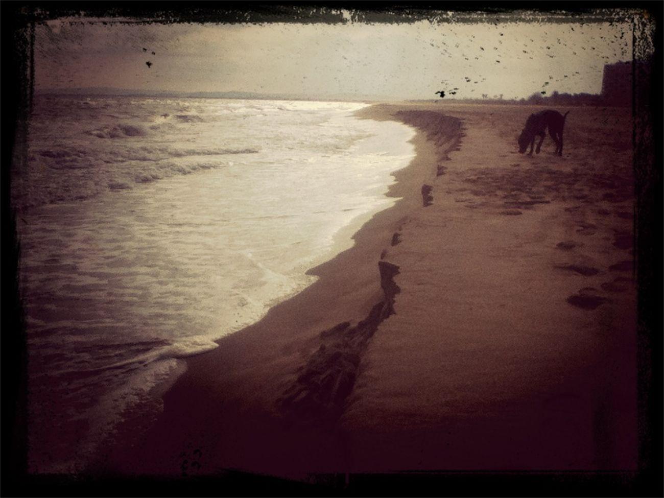 Empuria Brava Beach