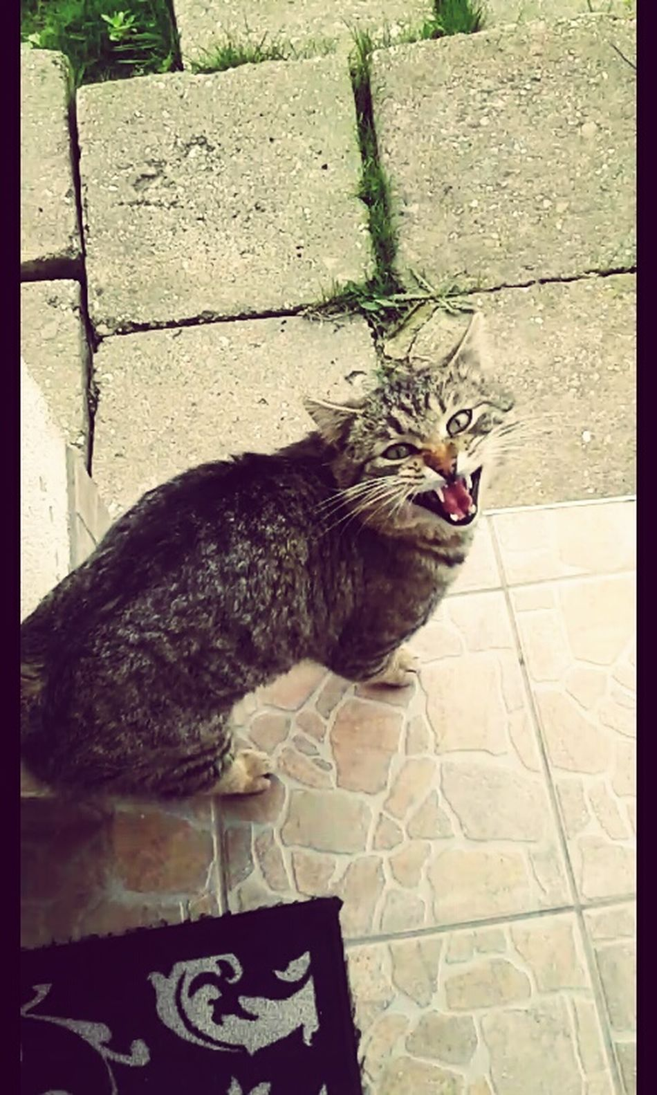 Cat Lovers Cat Cat Photography Angrycat Cat Eyes Catch The Moment Cateyes