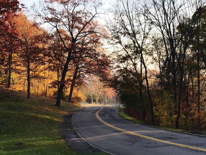 Tree Nature Autumn Beauty In Nature Change Road The Way Forward Scenics No People Tranquility Outdoors Tranquil Scene Growth Leaf Landscape Day Sky Winding Road