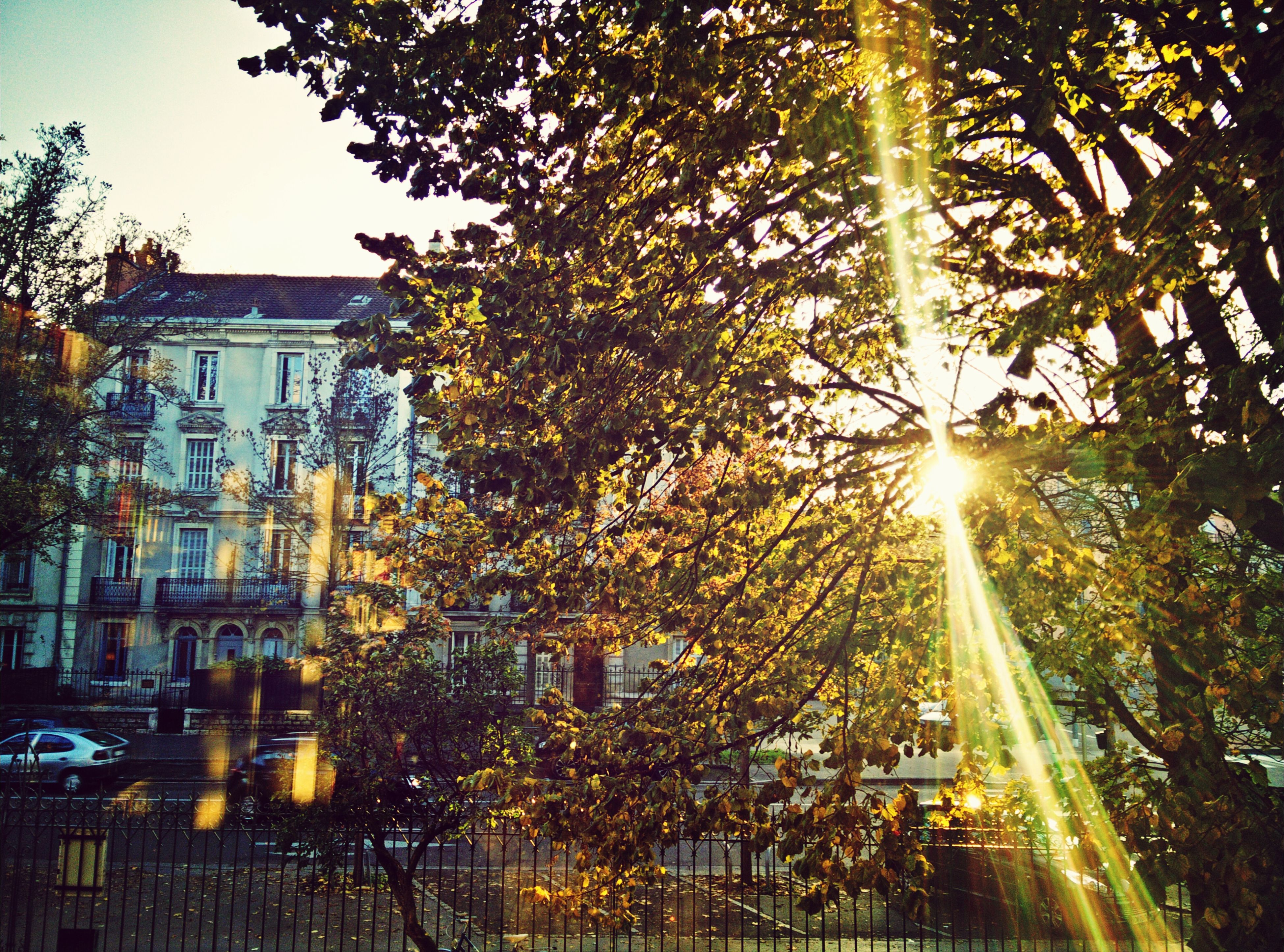 tree, architecture, building exterior, sun, built structure, sunbeam, sunlight, lens flare, city, growth, low angle view, illuminated, sky, outdoors, bright, branch, building, tall - high, clear sky, no people
