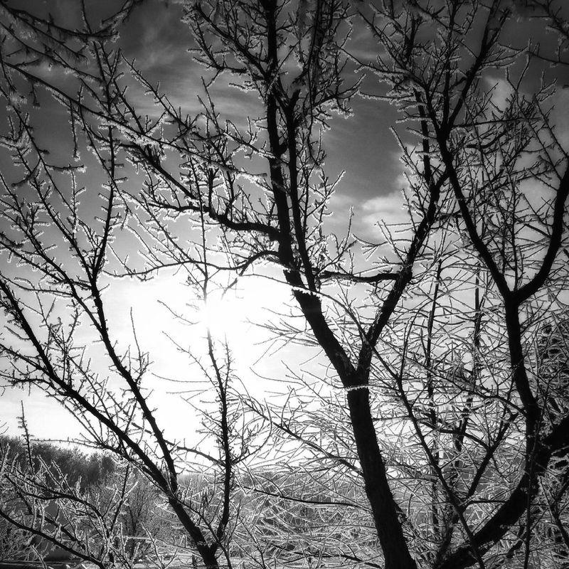 Nature Hello World Blackandwhite Black And White Black & White Winter Winter_collection Winter Wonderland Nature_collection The Trees Trees