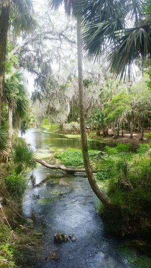 Gemini Springs Florida The Real Florida First Eyeem Photo Nature Florida Springs Beauty In Nature No People