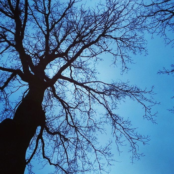Nature Tree Sky Up soms moet je naar Boven kijken om Mooie Dingen te zien Dont Look Down Look Up