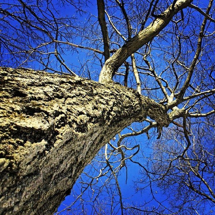 Fells Medford Fellsreservation Tree