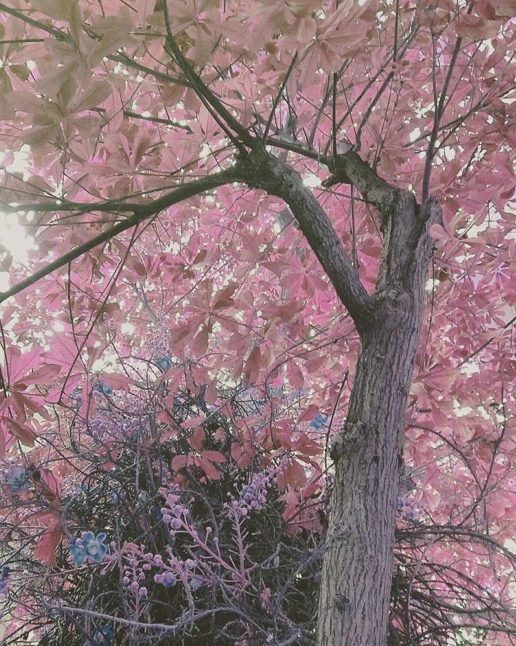 tree, branch, tree trunk, growth, nature, beauty in nature, no people, pink color, day, low angle view, outdoors, flower, fragility, sky, close-up