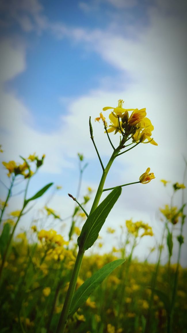 Little Yellow Flower Grow Up Sky Grass Flower Showcase: February Showcase February Dynamic Country Life As Usual