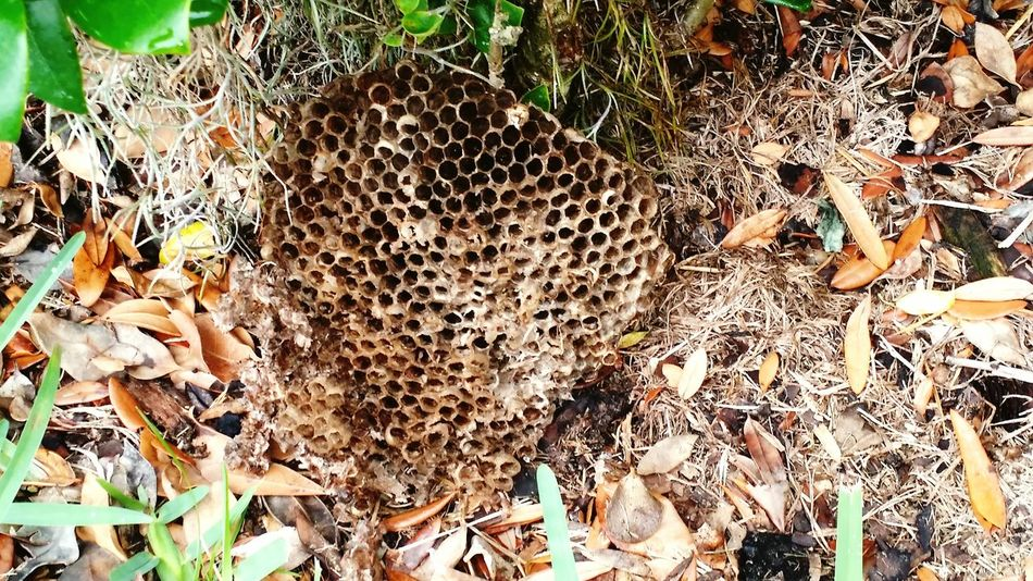 Open Ediit Taking Photos EyeEm Nature Lover Check This Out Hornet's Nest This Week On Eyeem Stree Photography