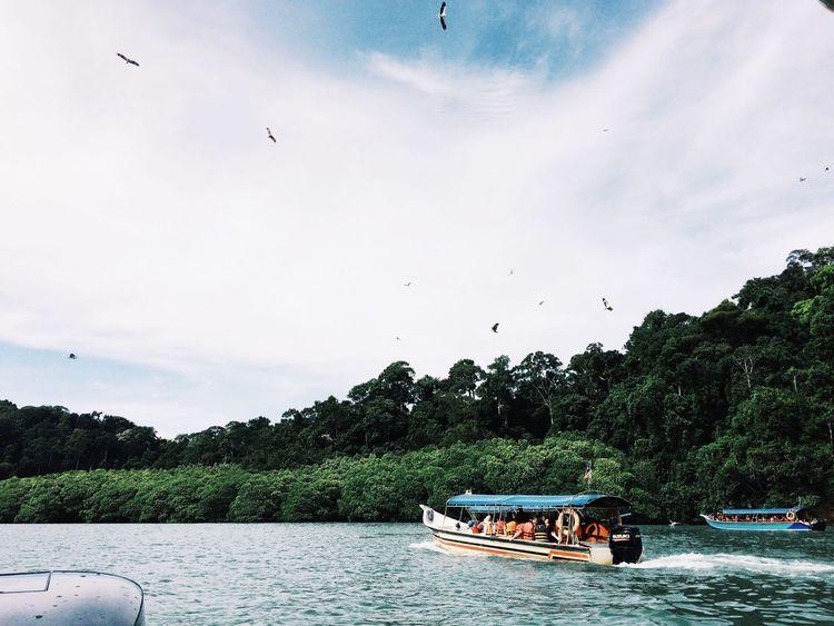 Island Hopping Island Wildlife Wildlife Photography Adventure Eagle Eagle - Bird Boat Serenity Green Nature Scenics Outdoors Tree Bird IPhoneography VSCO Cam Island View  Tranquility Travel Destinations EyeEm Best Shots