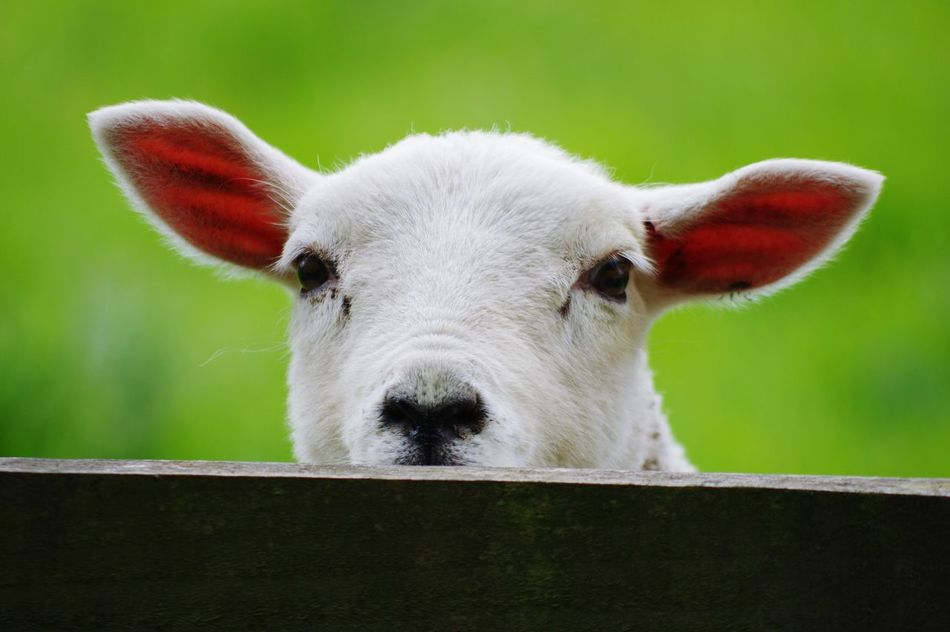 Beautiful stock photos of easter, Animal Head, Animal Themes, Close-Up, Day