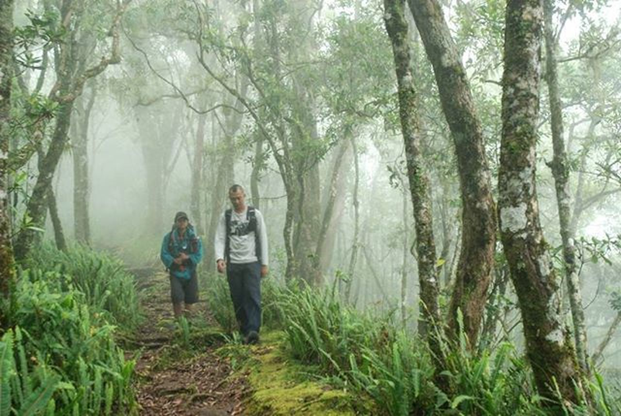 Senaru. . . Hutan di jalur senaru, gunung rinjani Lombok. 2008. . . . Nikond80 Senaru Gunung Gunungrinjani Rinjani Lombok Pendakiindonesia NusaTenggaraBarat  Hutan Kabut Instagunung Instagram Igers Travelgram Travel Adventure Hiking Trekking Camping Mountains Fog Forest Mainsebentar Instamood Nature natgeo lonelyplanet