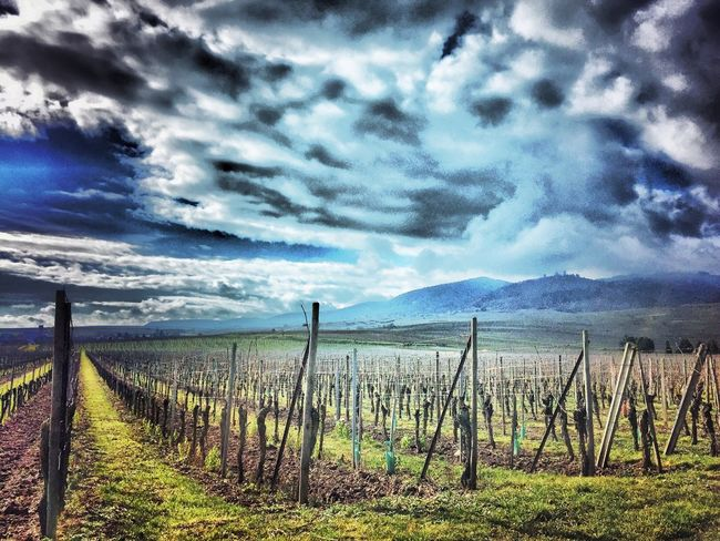 Check This Out Hanging Out Hello World Relaxing Taking Photos Enjoying Life HDR Hdr_Collection Tourisme Showcase: February Photography Photooftheday Photoshoot Sunny Day Clouds And Sky Colmar Alsace France Vignes Wine Haut Koenigsbourg Strasbourg Mulhouse